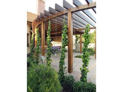 timber structure climbing plants