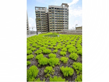 Ecologically friendly green roof systems and green walls