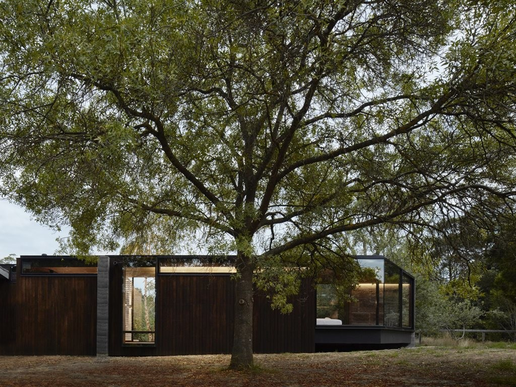 Rammed earth addition slots between existing trees linking occupants to nature